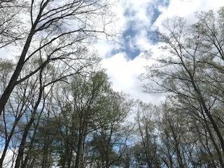 IMG_0305-thumbnail25B15D-thumbnail2[1].jpg